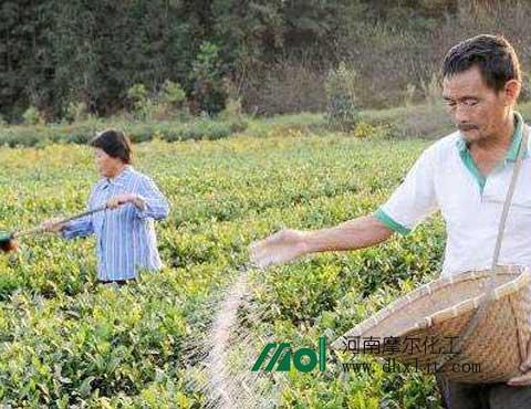 茶叶夏季施肥